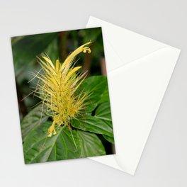 Canary Spurs Stationery Cards