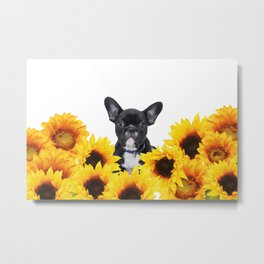 French Bulldog with sunflowers Metal Print