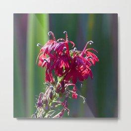 Watercolor Flower, Cardinal Flower 03, Emerald Cut, Florida Metal Print