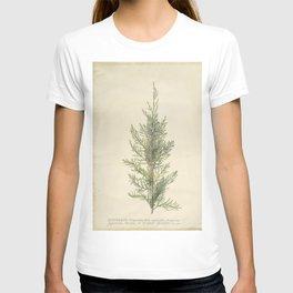 Botanical Juniper T-shirt