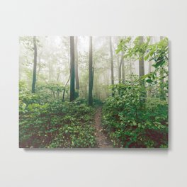 Smoky Mountain Forest Adventure - National Park Nature Photography Metal Print