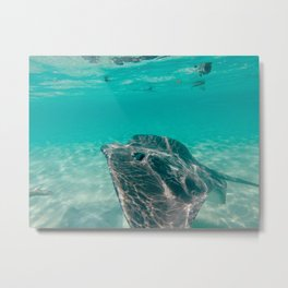 Sting Ray in Clear Water Metal Print