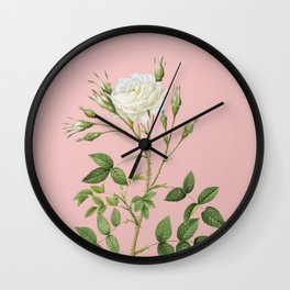 Vintage White Rose of Rosenberg Botanical Illustration on Pink Wall Clock