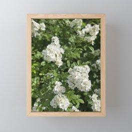 Photography  Framed Mini Art Print
