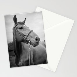 Horses of Instagram Stationery Cards