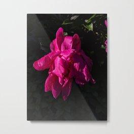 Pink flower HD  Metal Print