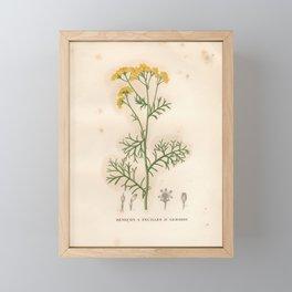 Flower senecon a feuilles d armoise (Fr)2 Framed Mini Art Print