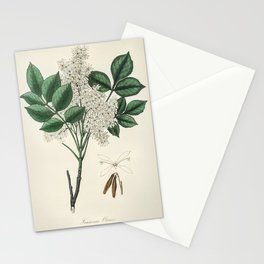 Manna ash (Fraxinus ornus) illustration from Medical Botany (1836) by John Stephenson and James Mors Stationery Cards