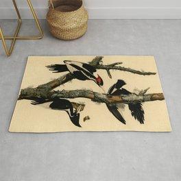 Ivory-billed Woodpecker (Campephilus principalis) Rug