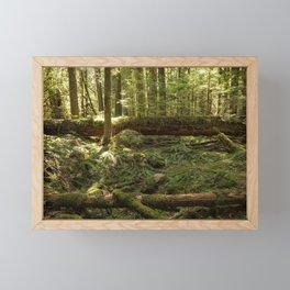 New Life From a Fallen Tree Framed Mini Art Print