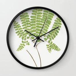Adiantum Pedatum (Northern Maidenhair Fern) from Ferns British and Exotic (1856-1860) by Edward Jose Wall Clock