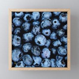 Blueberries background Framed Mini Art Print