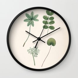 alchimillae, robinia caragana, ranunculus, adianthum Redoute Roses 3 Wall Clock