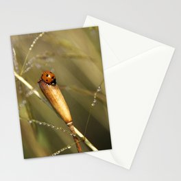 Morning Dew On Lady Bird Stationery Cards
