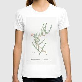 Mesembryanthemum Uncinatum (Ruschia Uncinata) from Histoire des Plantes Grasses (1799) by Pierre-Jos T-shirt