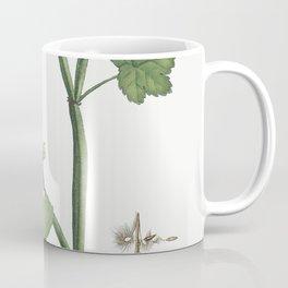 Pelargonium Tetragonum (Square-Stemmed Pelargonium) from Histoire des Plantes Grasses (1799) by Pier Coffee Mug