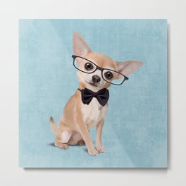 Mr. Chihuahua Metal Print