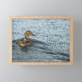 Mallard in the Rain Framed Mini Art Print