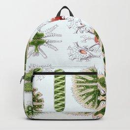 Ernst-haeckel-Desmidiea Backpack