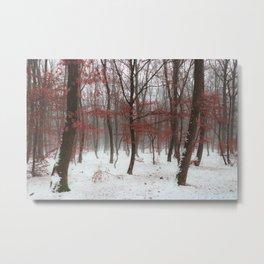 Print Photography Nature  Metal Print