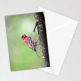 Fancy Finch Stationery Cards