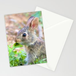 Watercolor Rabbit, Eastern Cottontail 01, Middletown, Maryland Stationery Cards