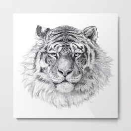 Tiger G003 Metal Print