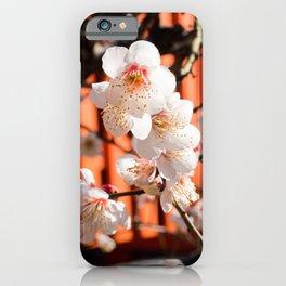 White plum blossom in a Japanese shrine iPhone Case