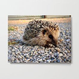 Hedgehog in Fall Metal Print