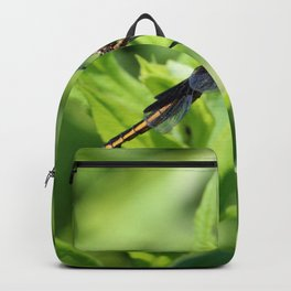 Dragon Fly 5 Backpack