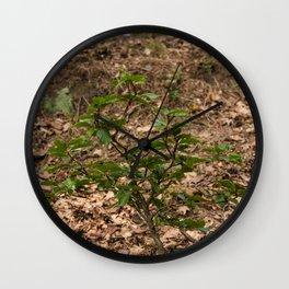 Little Tree Veluwe the Netherlands Wall Clock