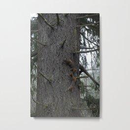 Fox Squirrel Tree Chase Metal Print