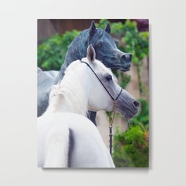 horse collection. arabian white Metal Print