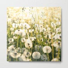 Field Of Dandelions Under The Morning Sun Metal Print
