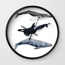 Orca, humpback and grey whales Wall Clock