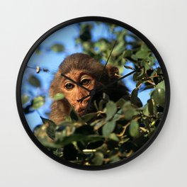 RHESUS MACAQUE MONKEY Wall Clock
