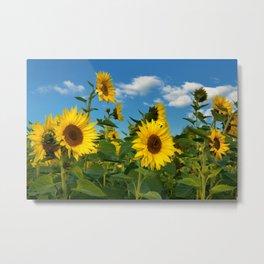 Sunflowers 11 Metal Print