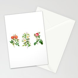 Antique Heirloom Rose Hand-colored Copperplate Engraving Original Watercolor PNG, Set of 3 Roses 1 Stationery Cards