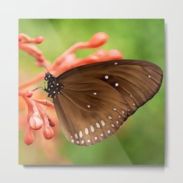 Spotted Swallowtail Butterfly | Watercolor Painting Metal Print